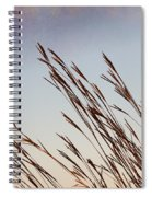 Turkey Foot Grass At Sunset Spiral Notebook