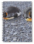 Two King Penguins By Alan M Hunt Spiral Notebook