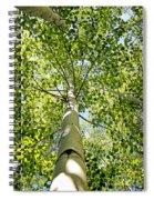 Under The Tall Aspens Spiral Notebook