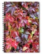 Virginia Creeper Wall Spiral Notebook