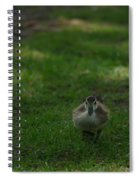 Waddling Ducklings Spiral Notebook