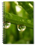 Water Drops On Wheat Leafs Spiral Notebook