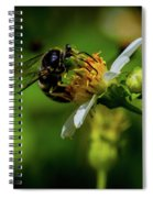 Western Sand Wasp Spiral Notebook