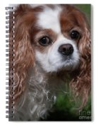 Where Is My Treat Spiral Notebook
