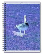 Where's Mine - The Blue Goose Spiral Notebook