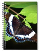 White Admiral Butterfly Spiral Notebook