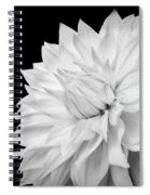 White Dahlia Spiral Notebook