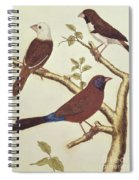 White Headed Munia, Double Coloured Seed Eater And Violet Eared Waxbill Spiral Notebook