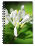 White Honeysuckle Flowers Spiral Notebook