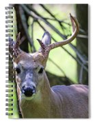 White Tailed Buck Portrait I Spiral Notebook