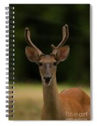 White-tailed Deer - 8282-2 Spiral Notebook