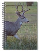 Whitetail Deer Spiral Notebook