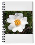 Wild Texas Rose, White Spiral Notebook