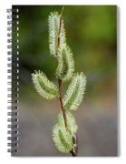 Willow In The Bloom Spiral Notebook