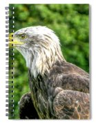 Wisconsin Bald Eagle Spiral Notebook