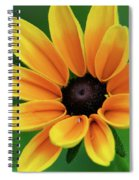 Yellow Flower Black Eyed Susan Spiral Notebook