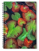 Yellow Pond Lily, Weminuche Wilderness Spiral Notebook