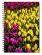 Yellow Star Tulips Spiral Notebook