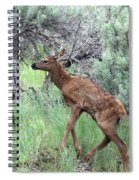 Yellowstone Elk Calf And Cow Spiral Notebook