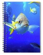 Yellowtails Spiral Notebook