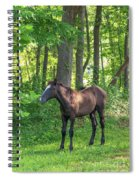 Young Brown Colt Spiral Notebook