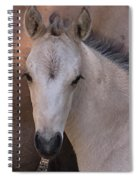 Young Colt Spiral Notebook
