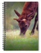 Young Elk Grazing Spiral Notebook