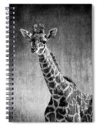 Young Giraffe Black And White Spiral Notebook