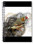 Z Is For Zebra Finch Spiral Notebook