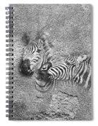 Zebras No 02 Spiral Notebook