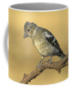 Female Chaffinch Coffee Mug