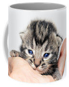 Kitten In A Hand Coffee Mug by Susan Leggett