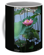 Lotus Flower At Calloway Coffee Mug