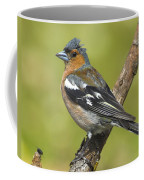 Male Chaffinch Coffee Mug