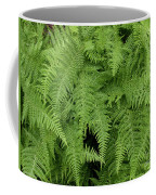 Mountain Ferns Of North Carolina Coffee Mug