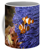 Ocellaris Clownfish Coffee Mug
