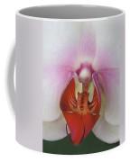 Phalaenopsis Orchid Closeup Coffee Mug