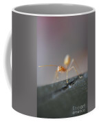 Red Ant Coffee Mug
