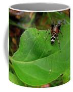 Sergiolus Capulatus  Coffee Mug