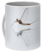 01 Cloeon Mayfly On My Window Coffee Mug