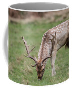 01 Fallow Deer Coffee Mug