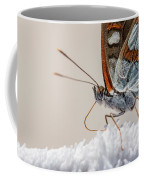 01 Southern White Admiral Butterfly Close Up Coffee Mug