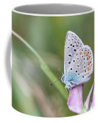 02 Common Blue Butterfly Coffee Mug