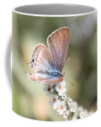 02 Long-tailed Blue Butterfly Coffee Mug