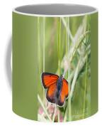 07 Balkan Copper Butterfly Coffee Mug