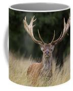 120425p037 Coffee Mug