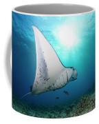 A Reef Manta Ray  Manta Alfredi Coffee Mug
