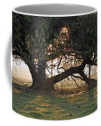A Tree In Mississippi Coffee Mug