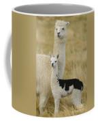 Alpaca With Young Coffee Mug by John Shaw