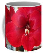 Amaryllis Named Black Pearl Coffee Mug